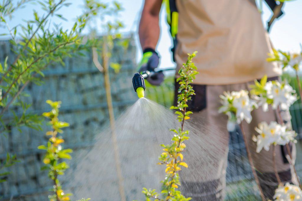 Man spraying weed killer on weeds